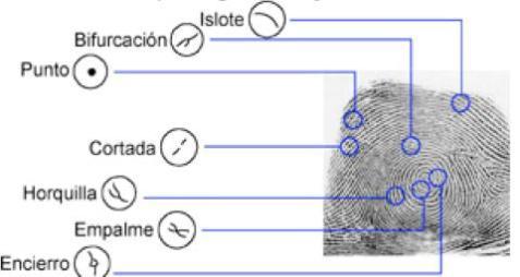 Principales Caracteristicas de la Huella digital